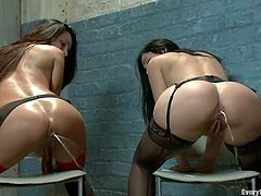 Two horny brunettes get their asses toyed by the third cihck