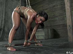 With her mouth ball gagged and tightly tied up Chanell doesn't has many choices but to stay bent over and endure what her executor does to her. She moans both with pleasure and pain as he rubs her pussy and humiliates her. Perhaps this bitch is starting to enjoy it, let's see if she will get a few spanks