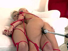 Two attractive naked blondes in shoes get tied together and then machine fucked. They kiss with desire and one of them gets her tight love hole dildo fucked from behind.