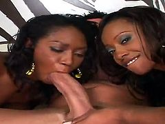 White dude Billy Glide is spending time with two luxurious busty and big ass ebony bitches Cherokee and Delotta Brown in this breathtaking interracial porn story.
