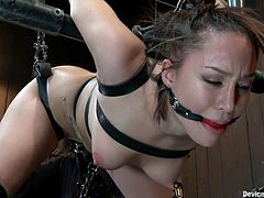 Secured in those chains and belts Gabi has nothing to do but obey and hope things won't get to rough for her pussy! She's ball gagged and can't even scream as she gets brutally fucked from behind with a dildo and a vibrator. The dildo slides perfectly between her pussy lips and damn does her sexy ass looks great
