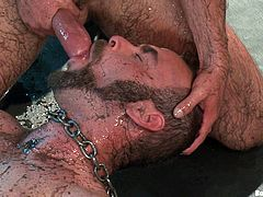 A couple of ripped bearded gay men having hot bondage sex in this scene right here, hit play and check it out man! It's fucking hot!