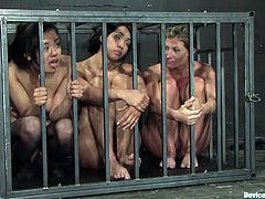 There are three submissive girls being dominated, tortured, forced to go lesbian and lick pussy and share a tiny cage together in this BDSM clip.