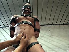 Chris Tyler is the gay jailer. He gets tied up with straps in a prison cell and then gets his dick fondled. After that he also gets his ass toyed with big dildo.