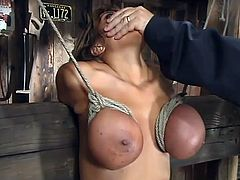 Curvaceous MILF gets gagged and tied up. Later on this hottie gets her vagina drilled and boobs massaged.