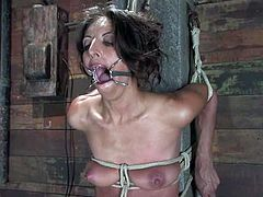 Stunning brown-haired babe gets gagged with a spider gag and tied up. Later on she gets her tits clothespinned and pussy toyed.