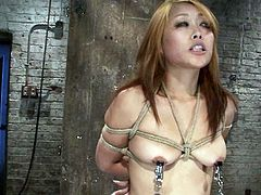 Nipple clamps, ropes and a sex toy are used to torture and please Yuki Mori at the same time. And the Japanese beauty loves it.