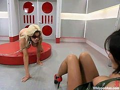 Very scientific BDSM porn with two juicy babes