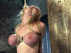Sexy blonde girl with hot tits undresses and then gets tied up. After that the guy fixes claws to her tits and twist them with ropes.