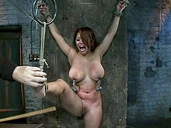 Curvaceous brunette chick gets tied up and gagged in a basement. Later on the master fixes claws to her nipples.