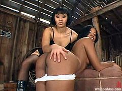 DragonLily and Sydnee Capri are having fun in a shed. Dragonlily binds and beats Sydnee and then plays with her poontang and fucks it with a stapon.