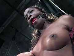 Ebony hottie Monique lets some guy tie her up to a chair and rub her black pussy with a dildo until she gets an orgasm.