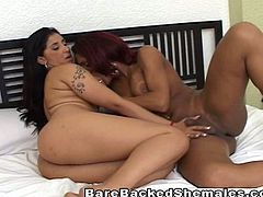 Watch this sexy big titted ebony shemale with one hot ass latina and a sexy dude who loves fucking and taking cocks in his ass too.Enjoy this hot sex mixture and barebacking of sexy shemale, Latina big ass babe and cock hungry stud!