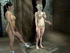 Big tittied blonde chick gets tied up by Isis Love. After that Haley gets her tit twisted and pussy toyed with a vibrator.
