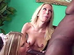 Adorable White chicks suck gigantic dick and then get their pussies licked. Then these black cock lovers get fucked rough as they like. In addition these ladies get their mouth filled with cum.