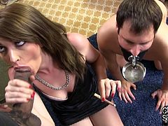 This white guy is bound and gagged and is forced to watch as his filthy wife gets her brains banged out by a hung, black stud.