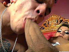 A naughty shemale adores getting laid in bed. Hardcore activities, such as having anal sex, really seems slutty Kenya's cup of coffee. Click to watch an intense scene of blowjob and enjoy the kinky details. The blonde shemale loves to shove hard her big cock in the partner's hole from behind...