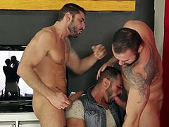 Are you thrilled when discovering, how chemistry works, when it comes to horny gay guys? Three muscled lads wearing sexy beards get undressed, to enjoy the sight of their abs and well-defined pectorals. Click to see them kissing passionately and sucking cock.
