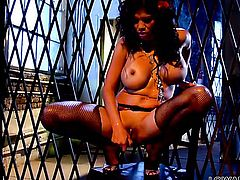 Senorita Alexis Amore howls as she fucks herself with toy