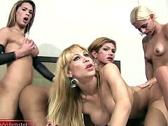Extreme ass fucking and cock sucking in hot tranny foursome