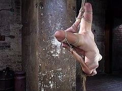 Ashley is hanging upside-down, but that little inconvenience is overshadowed by the vibrator pressed against her. She's sat upright again, this time with a noose around her neck to choke her, as she gets caned.