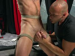 This bound gay hunk is rock hard for his master. The cruel Dom had a firm grip on the slave's penis. A second master joins in the fun and plugs the slave's butthole with a massive buttplug. This only makes the slave harder and hornier.