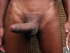 Black-skinned shemale babe Lavinia Magalhaes exposes her perfect body, spreads her ass cheeks in doggy position, shakes her her super-hard and long dick. Lavinia turns herself on and starts her hasty stroking action. She gets satisfied only with first cum drops.