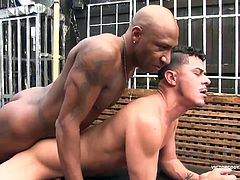 Leo Donato and Cesar Xes discover each other in a chance meeting. Both are horny and ready for some skin on skin satisfaction. Cesar goes down on Leos massive black cock, satisfying every inch. Leo follows by turning Cesar over and getting a quick taste of his hungry hole before lubing it with spit and sliding his stiff dick in. Leo barebacks the Latin bottom in a variety of positions, pounding Cesar until he fucks a massive cum load out of him that shoots over his head. This takes Leo over the